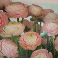 WallpaperG - Charlotte-Blinds-Wallpaper-Images-11.jpg